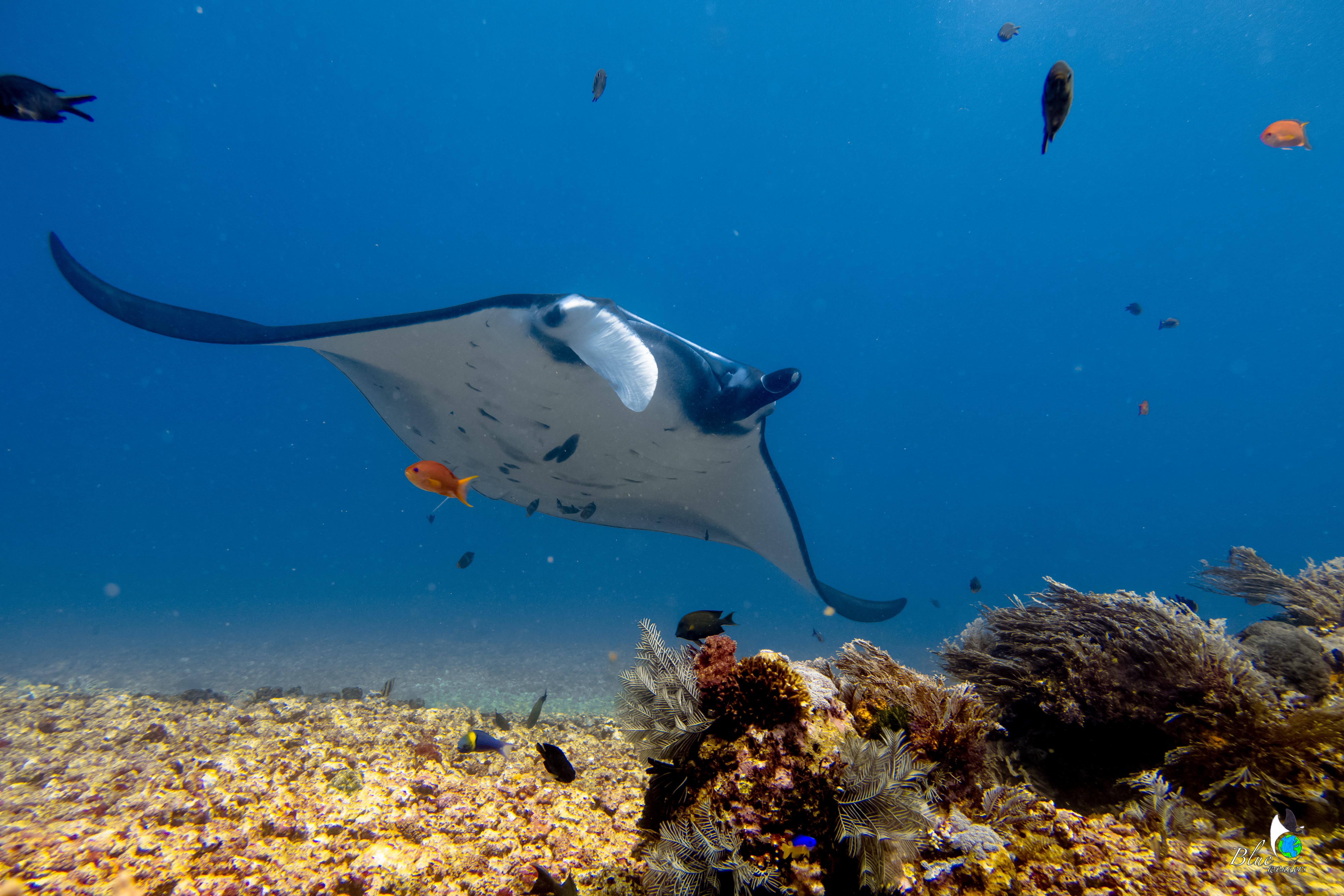 diving komodo - mantapoint